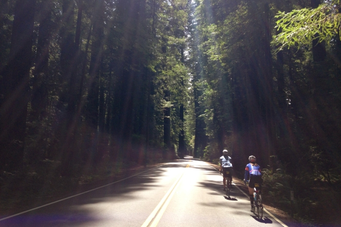 climate ride avenue of the giants